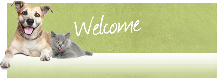 Welcome to Duchy Farm Kennels made